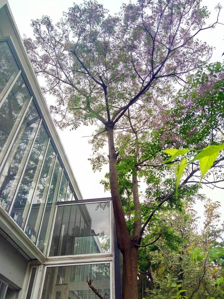 雑木ガーデンの家_03
